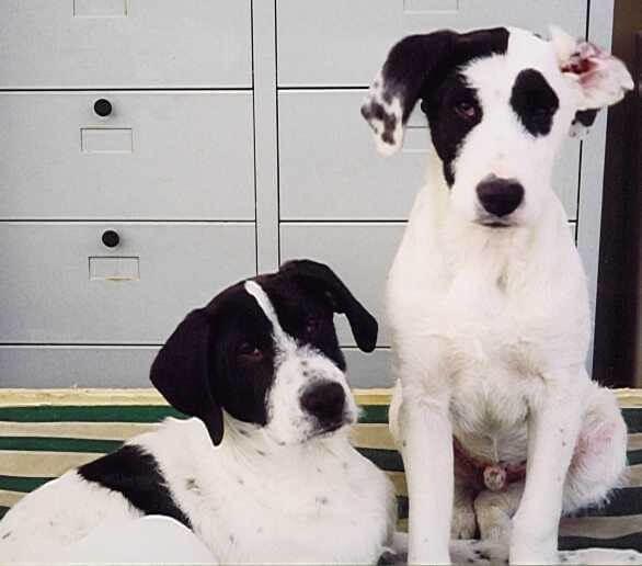 1999 Lillo e Tobia