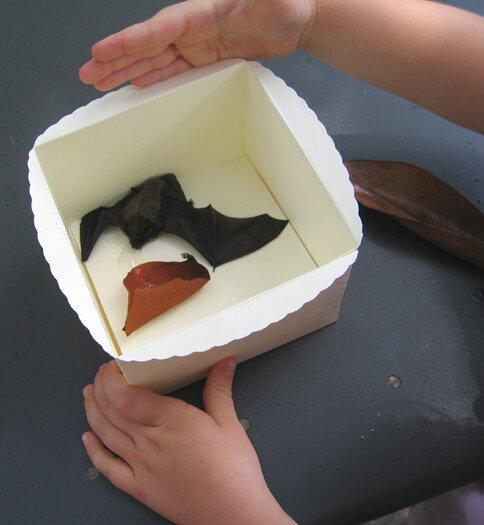 2007 pipistrello