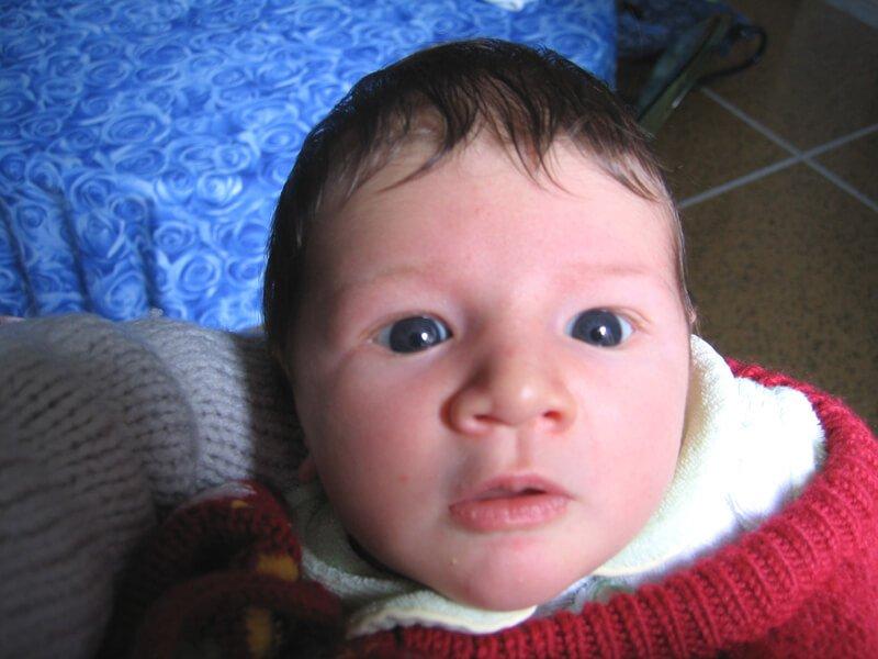 2008 Maia
