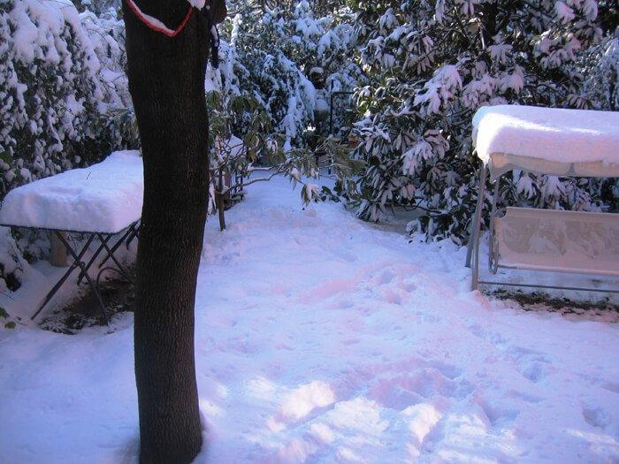 2009 giardino nella neve
